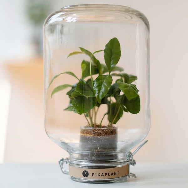 Pikaplant Jar Pflanze
